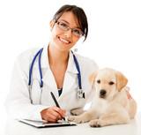 Sterilisation et assurance santé pour chien