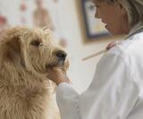 abces des chiens et assurance santé
