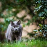 alopécies psychogène mutuelle santé chat