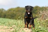 Assurance chien 2eme categorie mutuelle en ligne