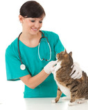 La calicivirose. la mutuelle santé pour chat.