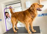 La Cataracte et assurance santé pour chien