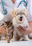 Coussinets coupés chez le chien assurance mutuelle