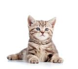 cyanose du chat  Mutuelle santé animaux domestiques