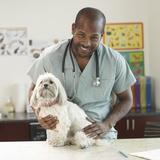Epihora chez le chien Mutuelle santé animaux domestiques