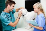 Formules assurance santé chiens et chats