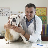 Hyperplasie prostatique et assurance santé pour chien
