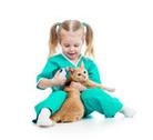 insuffisance rénale du chat Mutuelle santé animaux domestiques