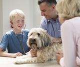 keratite chez le chien mutuelle santé animaux domestiques