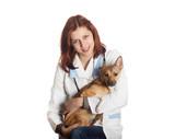 la maladie de carré et la mutuelle chien