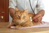 la rage Mutuelle santé chat
