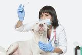 la toux du chenil assurance santé chien