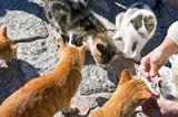 la leucose Mutuelle santé chat