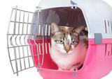 mauvaise haleine du chat Mutuelle santé animaux domestiques
