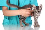 Mutuelle santé animaux domestiques