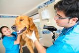 la piroplasmose Mutuelle santé chien
