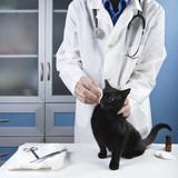 rhinotrachéite du chat Mutuelle santé