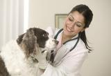 torsion de l'estomac chez le chien assuré