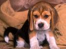 Tumeur aux cerveaux et assurance santé pour chien