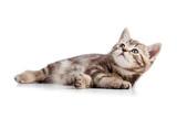 virus fiv du chat Mutuelle pour chat
